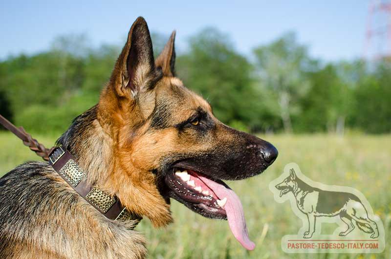 Cani Di Razza Pastore Tedesco Negozio Online Di Accessori Da Per